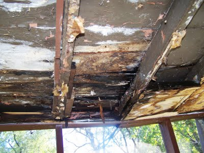 Moldy, rotted wood-framed house