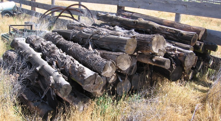 Juniper and cedar poles like these are often available at auctions and farm sales.